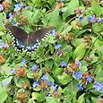 Butterflies_086
